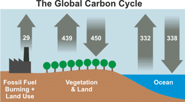 https://skepticalscience.com/images/Carbon_Cycle.gif